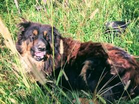 Bingo the dog at Baia's